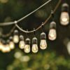 edison-string-lights-suspended-photo